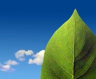 Grünes Blatt auf bewölktem Himmel Stockbild