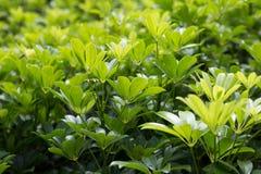 Grünes Blatt auf dem Morgen Stockfotografie
