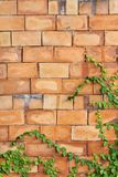 Grünes Blatt auf dem Ziegelstein Stockfoto