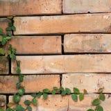 Grünes Blatt auf dem Ziegelstein Stockbilder