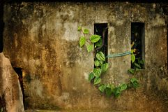 Grünes Blatt auf der Wand Lizenzfreies Stockfoto