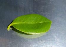 Grünes Blatt auf Edelstahl Lizenzfreies Stockbild