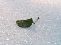 Grünes Blatt auf einem Schnee. lizenzfreies stockbild