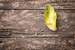 Grünes Blatt auf einer hölzernen Beschaffenheit Stockfotografie