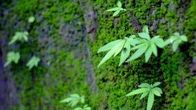 Grünes Blatt auf Felsen der Farn- und Insektenfliege, zum weg Blätter zu treiben und Springen stock video