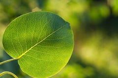 Grünes Blatt auf grünem Hintergrund Lizenzfreies Stockbild