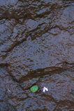 Grünes Blatt auf hartem nassem Felsen Stockbilder