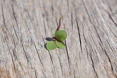 Grünes Blatt auf Holz Stockfoto