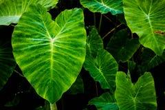 Grünes Blatt auf Natur Stockfoto