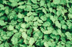 Grünes Blatt auf Naturhintergründen Stockbilder