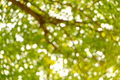 Grünes Blatt auf schönem grünem bokeh Hintergrund Stockfoto