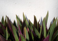 Grünes Blatt auf Wand Lizenzfreie Stockfotos