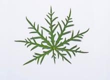 Grünes Blatt auf Weiß Lizenzfreie Stockfotos