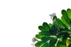 Grünes Blatt auf Weiß Lizenzfreie Stockbilder