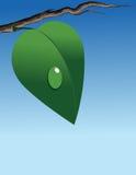 Grünes Blatt auf Zweig Stockfotografie