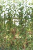 Grünes Blatt bokeh als Hintergrundbeschaffenheit Lizenzfreie Stockfotos