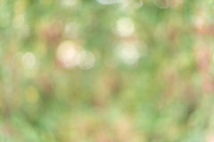 Grünes Blatt bokeh als Hintergrundbeschaffenheit Lizenzfreie Stockbilder