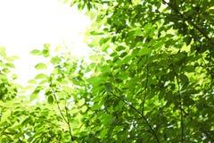 Grünes Blatt in den im Freienparks lizenzfreie stockbilder