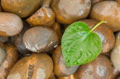 Grünes Blatt in der Herzform auf dem nassen Felsen Lizenzfreie Stockfotos