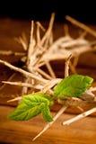 Grünes Blatt der Hoffnung Stockbilder
