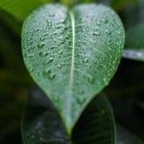 Grünes Blatt der Nahaufnahme mit hellem Hintergrund lizenzfreie stockfotos