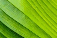 Grünes Blatt der Nahaufnahme, zum als Tapete einzustellen Lizenzfreie Stockbilder