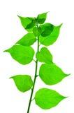 Grünes Blatt in der Natur stockfoto