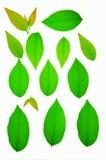 Grünes Blatt in der Natur stockfotografie