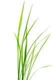 Grünes Blatt in der Natur lizenzfreie abbildung