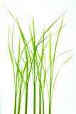 Grünes Blatt in der Natur lizenzfreie stockfotos