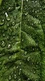 Grünes Blatt in der Natur Stockbild