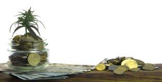 Grünes Blatt des Hanfs, Marihuana, Ganja, Hanf auf einem Bill 100 US-Dollars Die goldene Taste oder Erreichen für den Himmel zum  Stockbild
