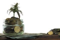 Grünes Blatt des Hanfs, Marihuana, Ganja, Hanf auf einem Bill 100 US-Dollars Die goldene Taste oder Erreichen für den Himmel zum  Stockfoto