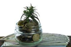 Grünes Blatt des Hanfs, Marihuana, Ganja, Hanf auf einem Bill 100 US-Dollars Die goldene Taste oder Erreichen für den Himmel zum  Lizenzfreies Stockbild
