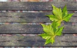 Grünes Blatt des Herbstes über Holzbank mit Kopienraum Stockfoto