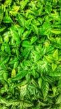 Grünes Blatt des Hintergrundes Lizenzfreie Stockfotos