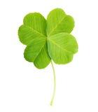 Grünes Blatt des vierblättrigen Kleeblattes lokalisiert Stockbild