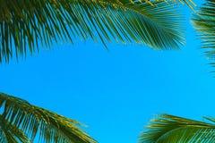 Grünes Blatt einer Palme lizenzfreie stockbilder