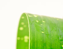 Grünes Blatt einzeln mit Punkten und waterdrops stockbilder