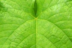 Grünes Blatt für Hintergrund lizenzfreie abbildung