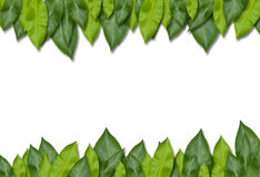 Grünes Blatt-Feld Stockfotografie