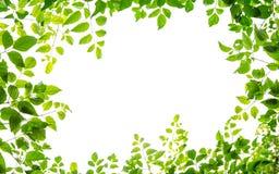 Grünes Blatt fream Lizenzfreie Stockbilder