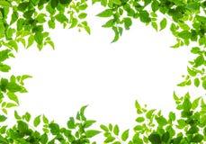 Grünes Blatt fream Stockfotografie
