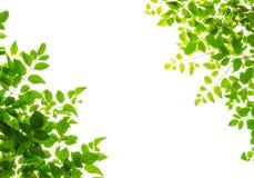 Grünes Blatt fream Stockbilder
