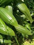 Grünes Blatt im Garten stockbild
