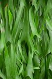 Grünes Blatt im Garten Lizenzfreie Stockfotografie
