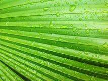 Grünes Blatt lebendig Stockbilder