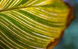 Grünes Blatt mit Adern. Kreative Natur. Stockbild
