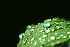 Grünes Blatt mit blauem Tau Lizenzfreie Stockfotografie