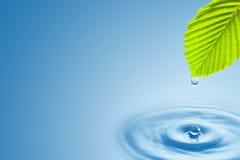 Grünes Blatt mit dem Spritzen von Wassertropfen. Stockbild